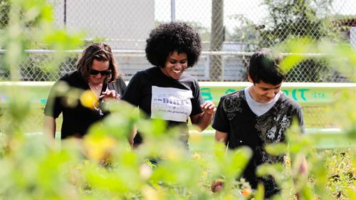 GM Develops Green Thumb in Urban Gardening