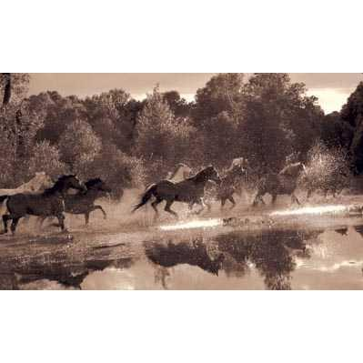 horse pictures to print. Horse Crossing Poster Print