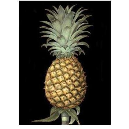 Brookshaw S Exotic Pineapple I Poster Print