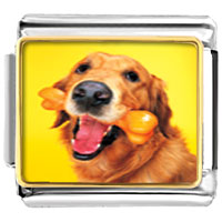 Italian Charms - golden retriever and bone charm photo italian charm Image.