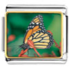 Butterfly Close Up Charm Photo Italian Charm