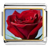 Red Rose In Sunshine Charm Photo Italian Charm