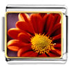 Orange Daisy Charm Photo Italian Charm