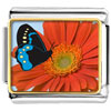 Butterfly And Flower Photo Italian Charm