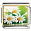 Beautiful Triple Daisy Photo Photo Italian Charm
