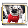 Dressed Up Pug Charm Photo Italian Charm
